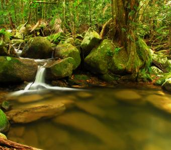 Daintree Rainforest at Cape Trib Camping