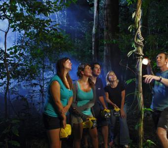Night Walk in the Daintree Rainforest at Cape Tribulation
